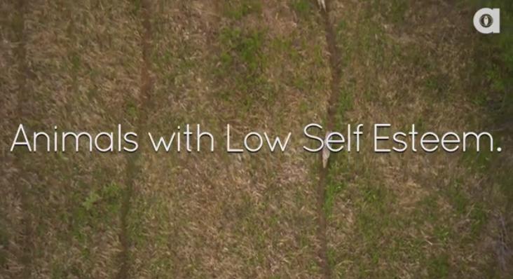 Animals with low self esteem
