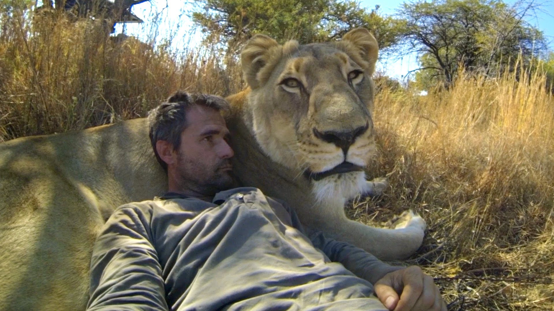 Are lions the new endangered species? - Media Animal TV