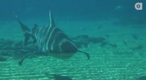 Are bull sharks the most dangerous?