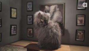 Colonel Meow - Animalist
