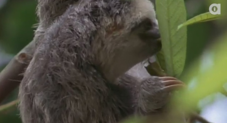 Sloths have 3 toes