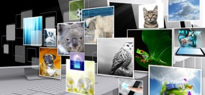 Why animals go viral on the net