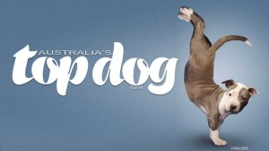 australias top dog talent dog low rez