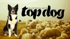 australias top dog working dog low rez