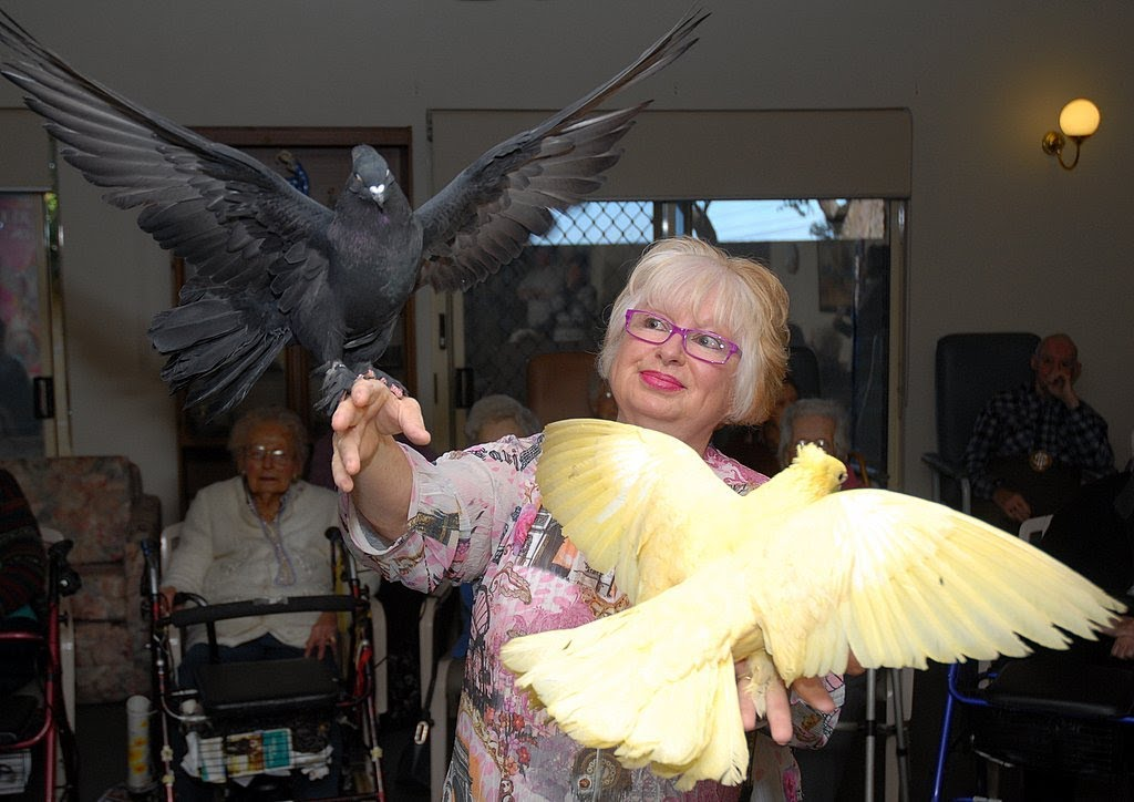 Birds dish out good medicine to old folk