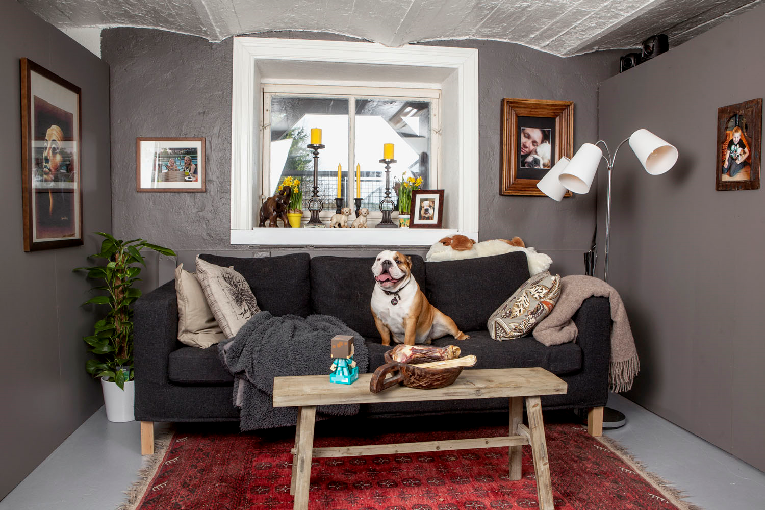 A bulldog love story from Norway