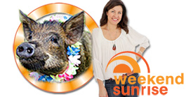 Tracey Preston from Media Animal TV on Sunrise