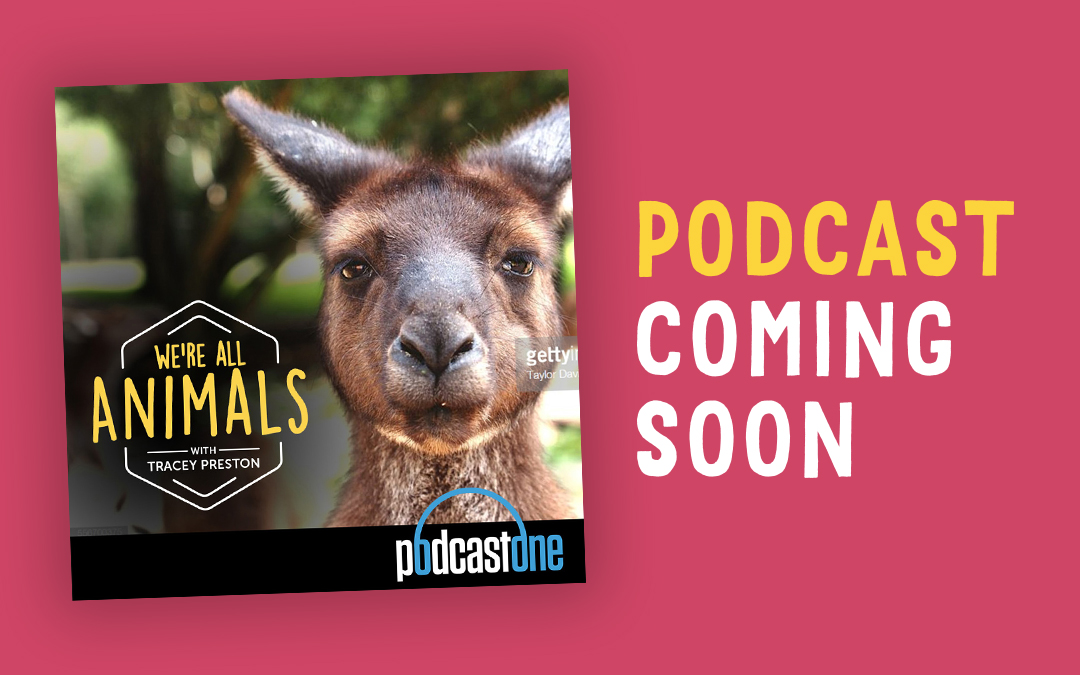 Listen to Tracey's stories on her new animal podcast show coming soon to PodcastOne