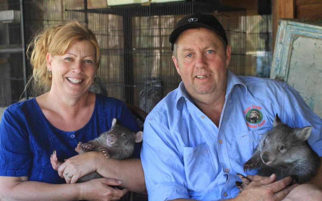 Meet the couple who run a Wombat ER!